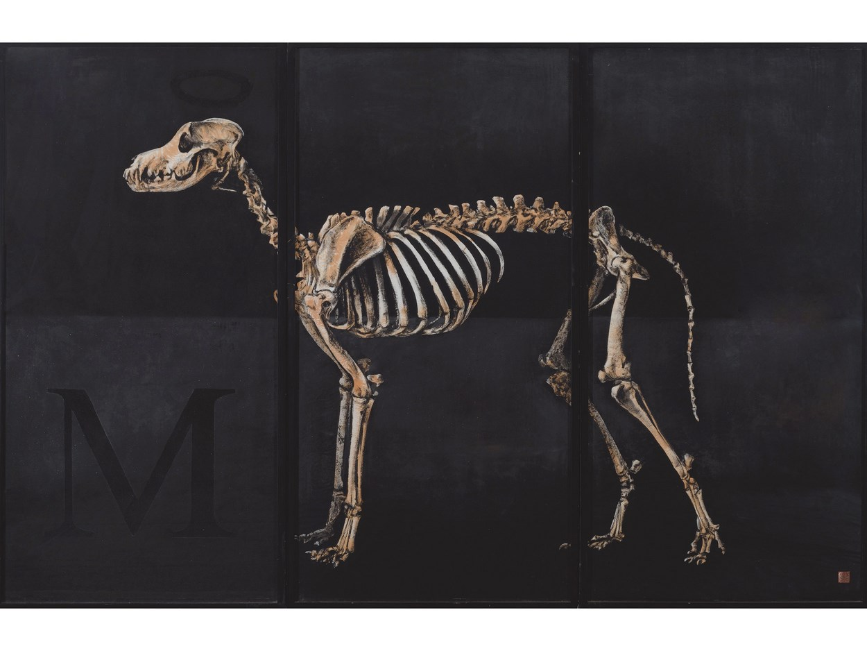 Greyhound Skeleton